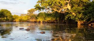 Safari Karibu