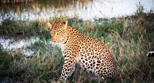 Botswana : La Faune