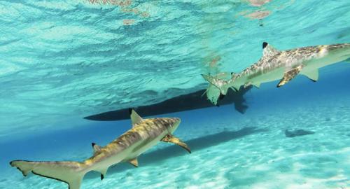 Tahiti et ses îles : La plongée